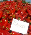 RUBICON F1 (500 SEM)