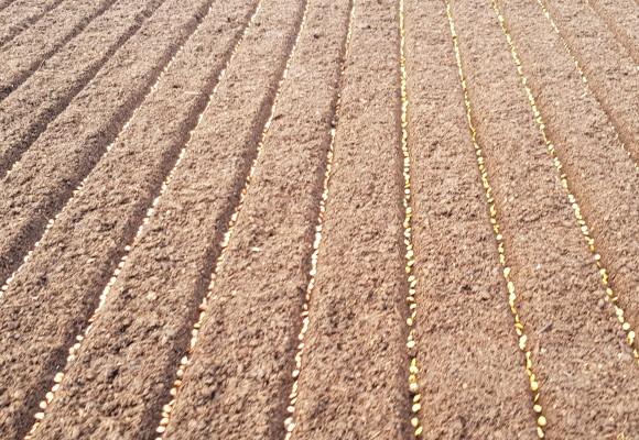 Parametrii și condițiile necesare germinării optime a semințelor de legume
